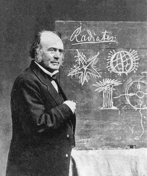 圖八:十九世紀中葉美國最具影響力的瑞士博物學者阿格西,約一八七〇年攝。