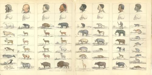 圖十一:《人類的形態》中的插圖。