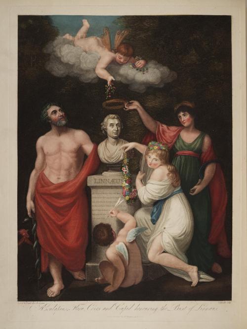 圖2 收錄於《佛洛拉之殿》中的林奈肖像